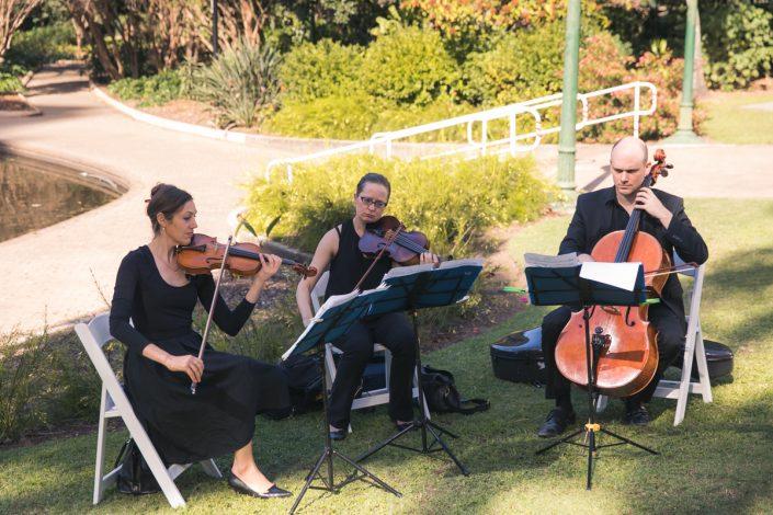 wedding at Brisbane botanical gardens